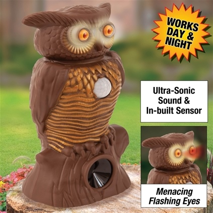 Motion Activated Sensor Owl